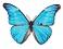 blue butterfly 25.jpg